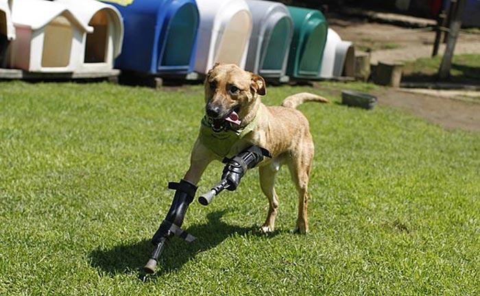 handicapped-dog1