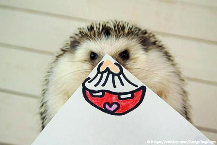 hedgehog-faces-5