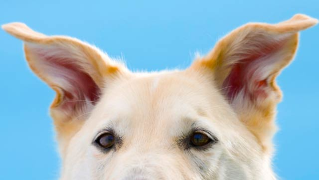 facts-about-dogs-16