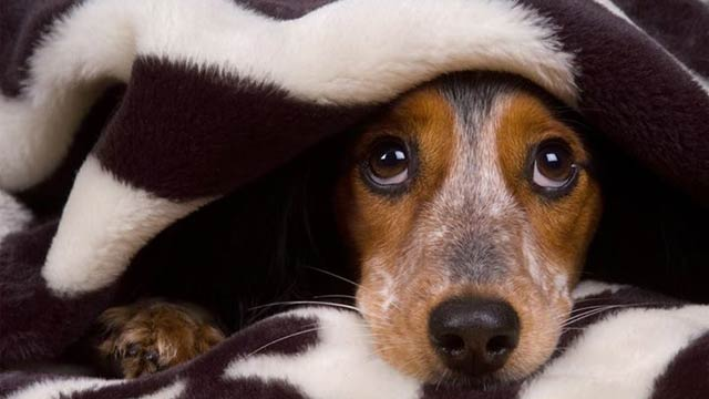 facts-about-dogs-3