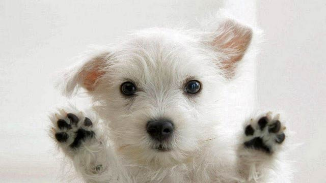 facts-about-dogs-8