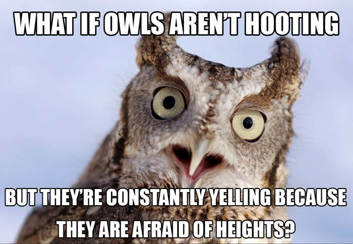 owls-arent-hooting