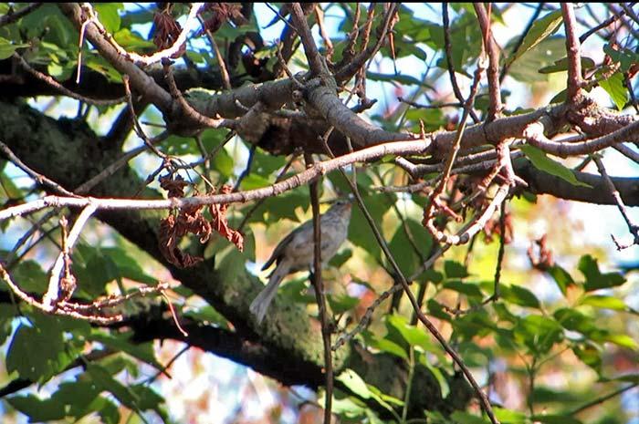 raising-baby-songbird-20