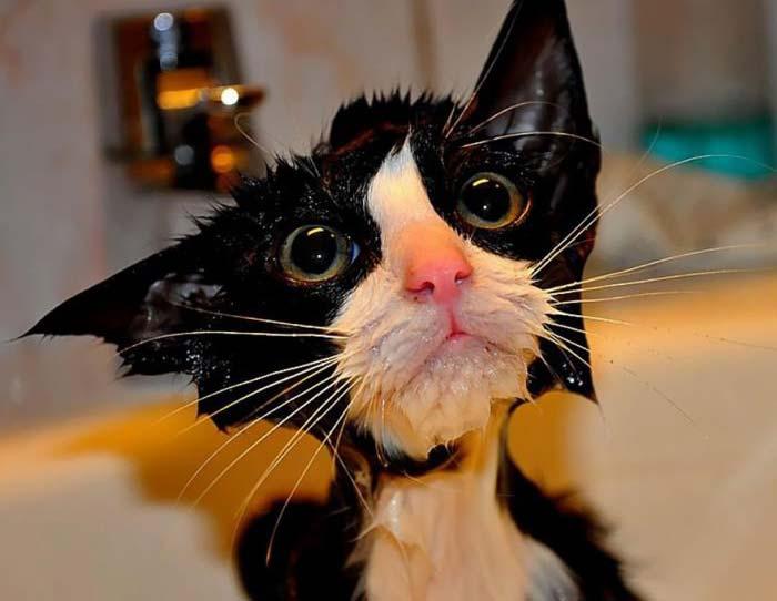 wet-cat-1