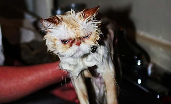 wet-cat-16