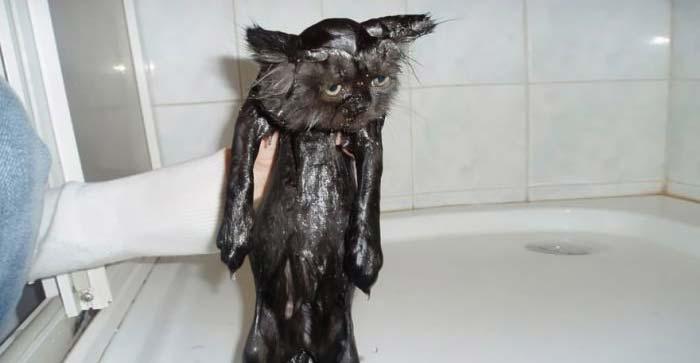 wet-cat-18