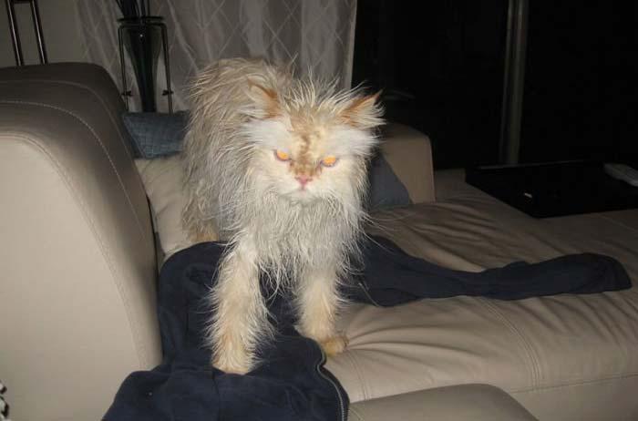 wet-cat-19