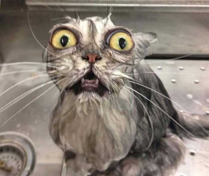 wet-cat-21