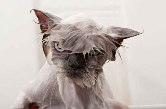 wet-cat-3