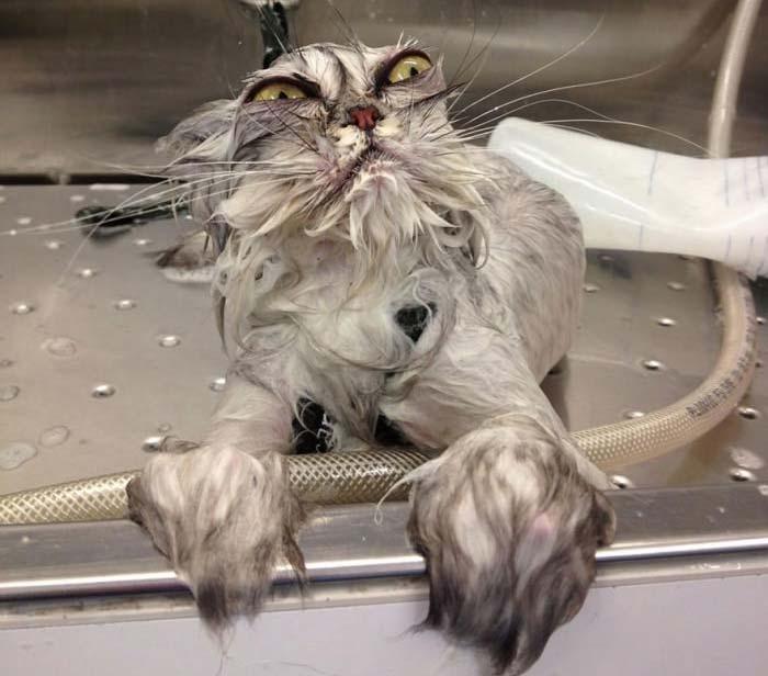 wet-cat-4