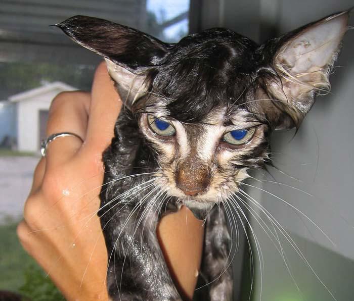 wet-cat-5