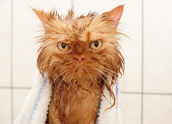 wet-cat-6