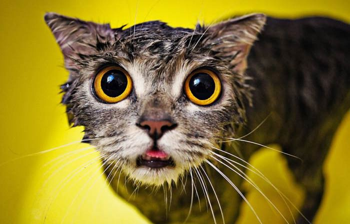 wet-cat-9