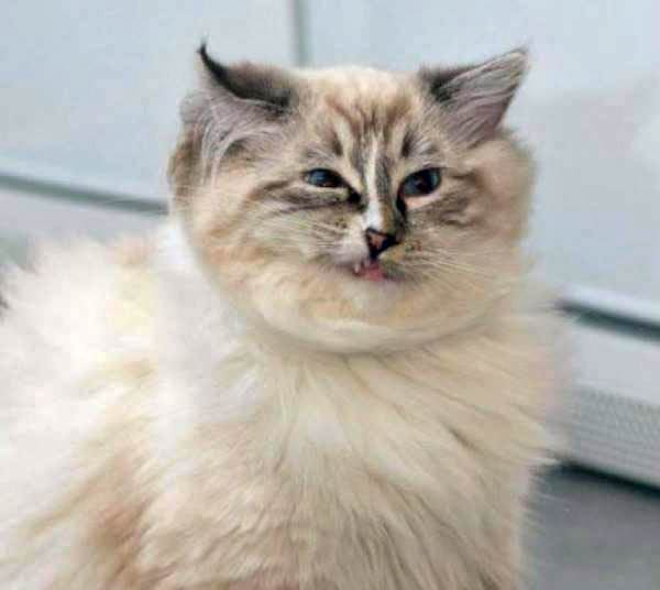 cats-about-to-sneeze-5