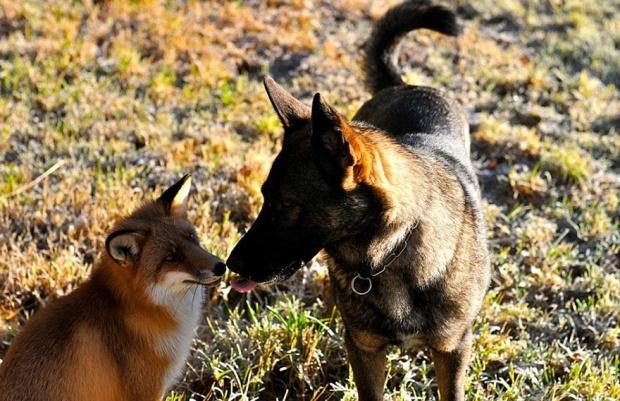 fox14