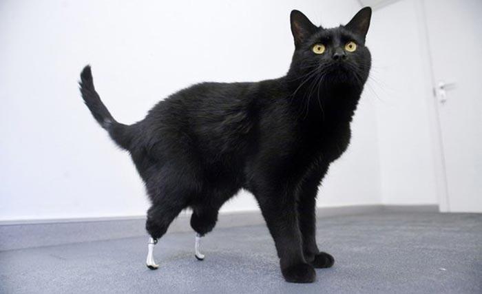 handicapped-cat-2