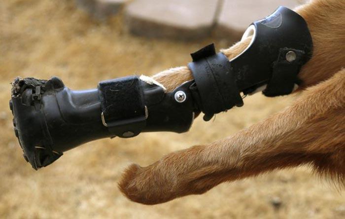handicapped-dog-5