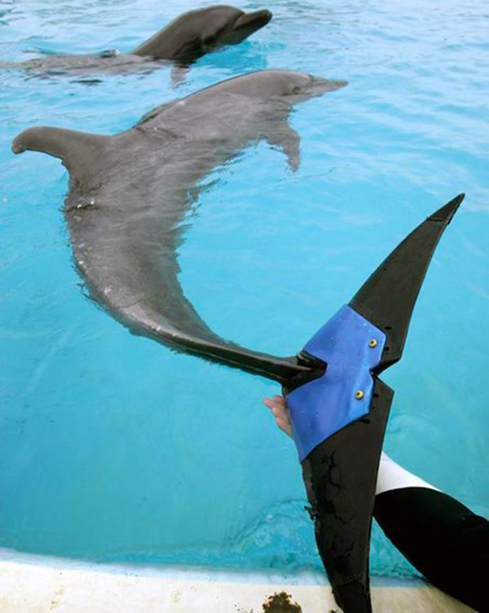 handicapped-dolphin