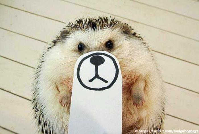 hedgehog-faces-1