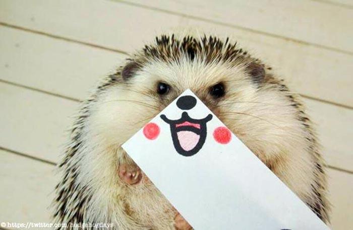 hedgehog-faces-2
