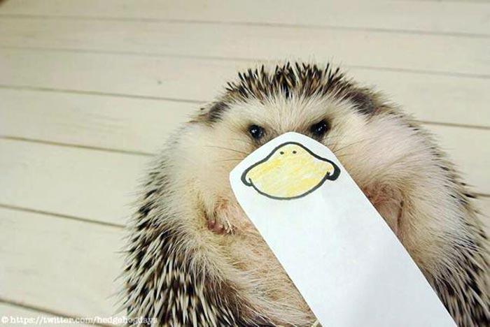 hedgehog-faces-3
