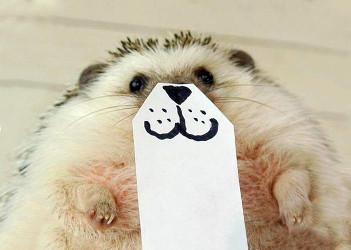 hedgehog-faces-4