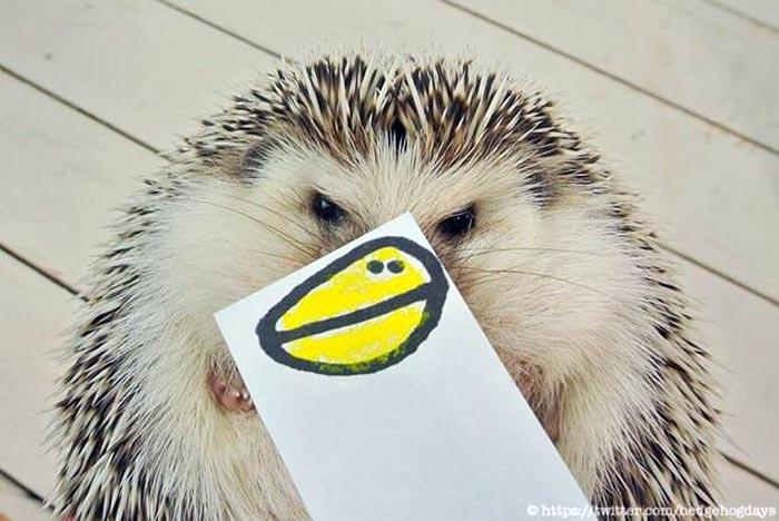 hedgehog-faces-7