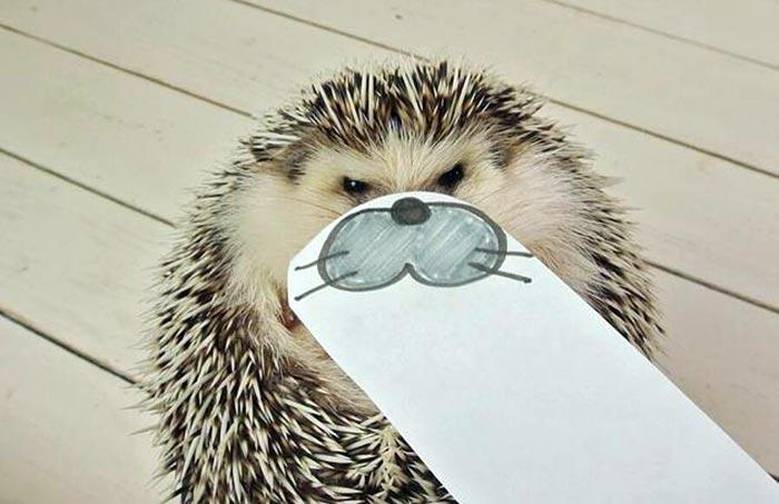 hedgehog-faces-9