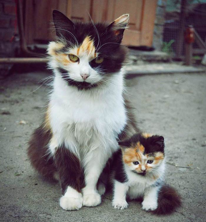 baby-animals-with-parents-1