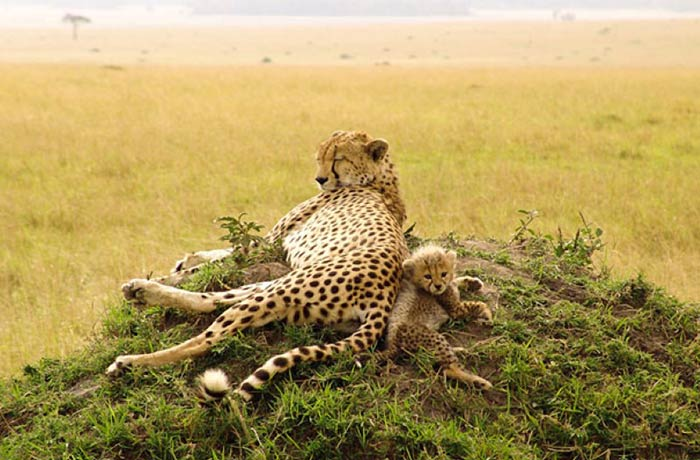 baby-animals-with-parents-15