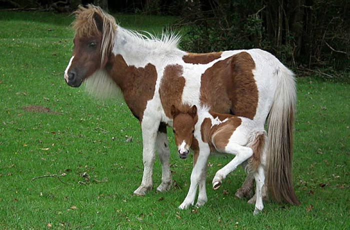 baby-animals-with-parents-17