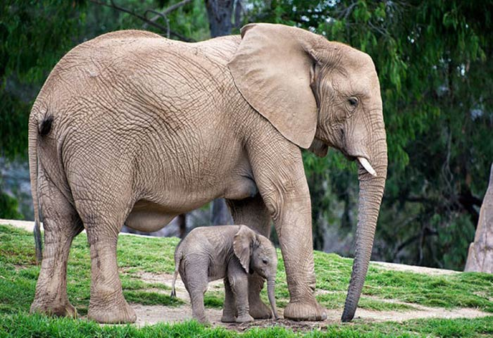 baby-animals-with-parents-24