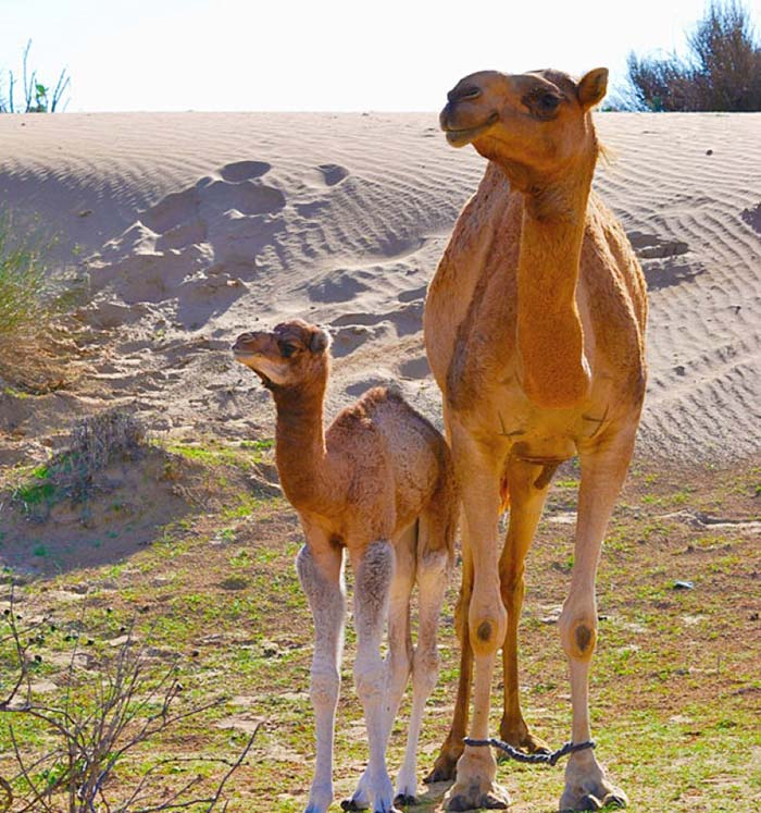 baby-animals-with-parents-28