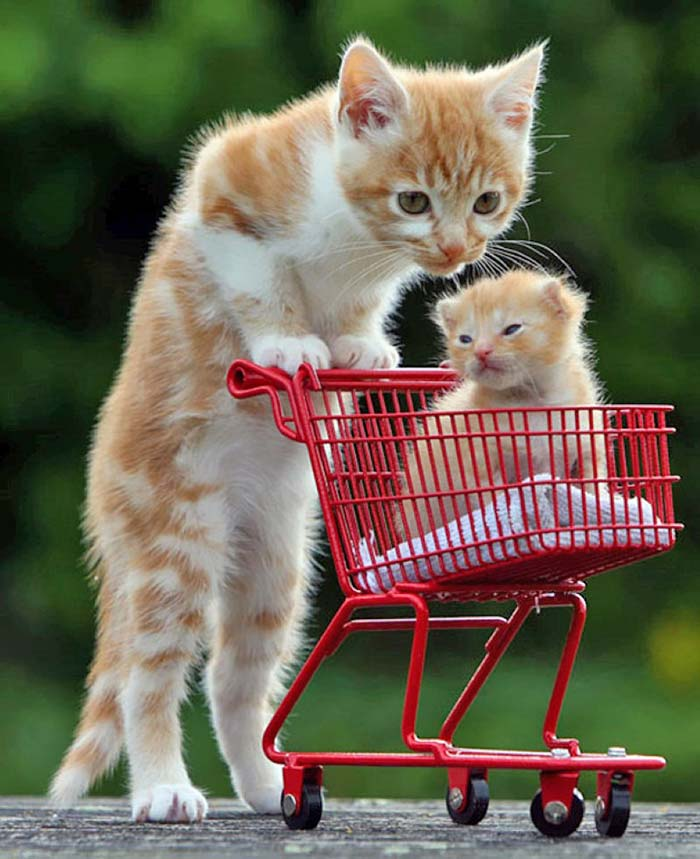 baby-animals-with-parents-29