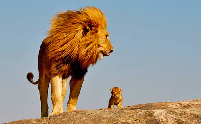 baby-animals-with-parents-3