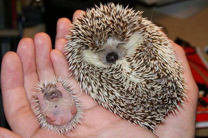 baby-animals-with-parents-4