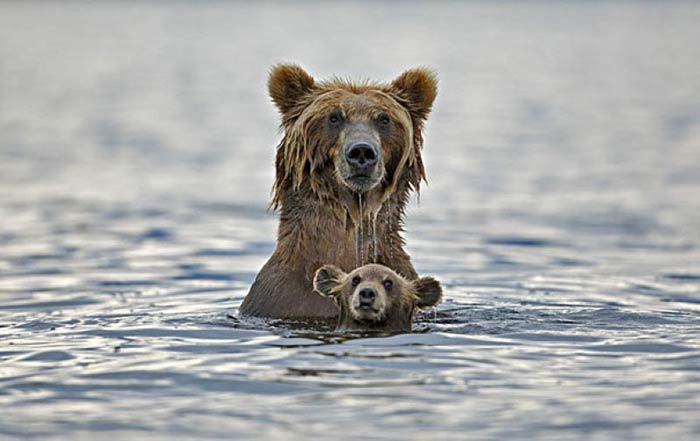 baby-animals-with-parents-7